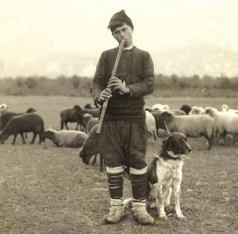 Преживяла три войни, България е на първо място по овцевъдство в Европа през 1922 г.