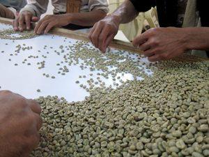 В 12 региона в Йемен отглеждат реколтата.