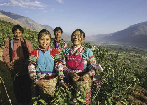 В азиатската страна се отглежда Арабика, която включва разновидностите Катимор и Типика. Кафето там често е с дървесни нотки и плътно и тежко тяло.
