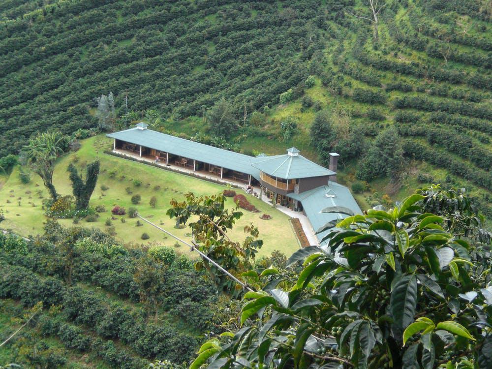 Фермите могат да бъдат намерени, скрити в различни планински вериги.