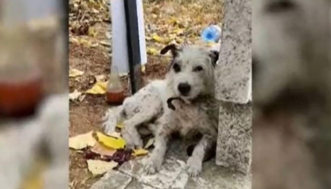 Куче повече от два месеца живя на гроба на своята